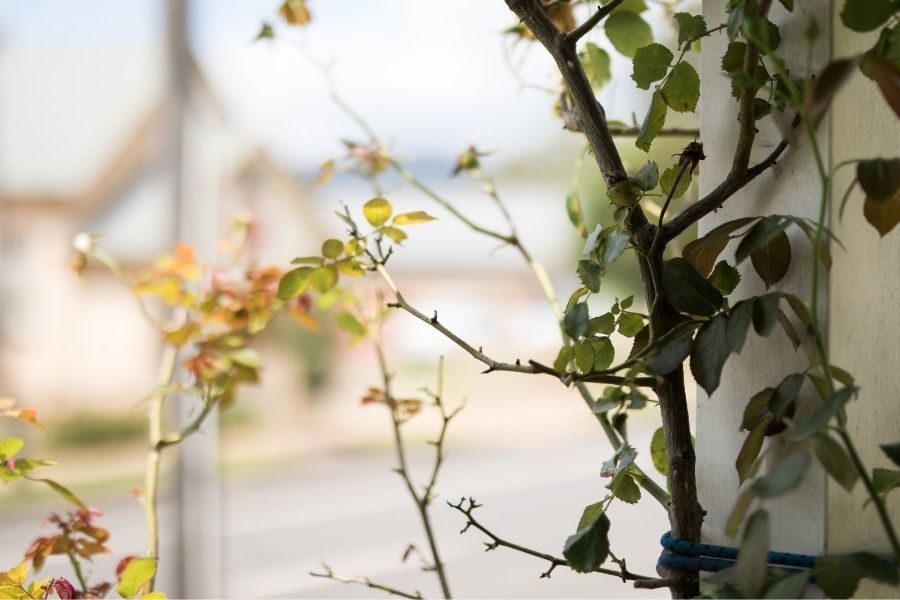 In this article, Chip Ingram explores what it means to bear fruit, to be pruned, and to abide in Christ.